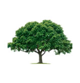 Trimmed tree by ABC Tree Services of Fort Myers, FL